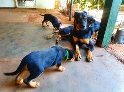 Charm x Cash Pups with Cash