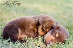 Chrissie Pups