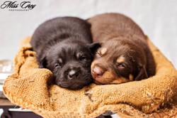 Bindi Pups