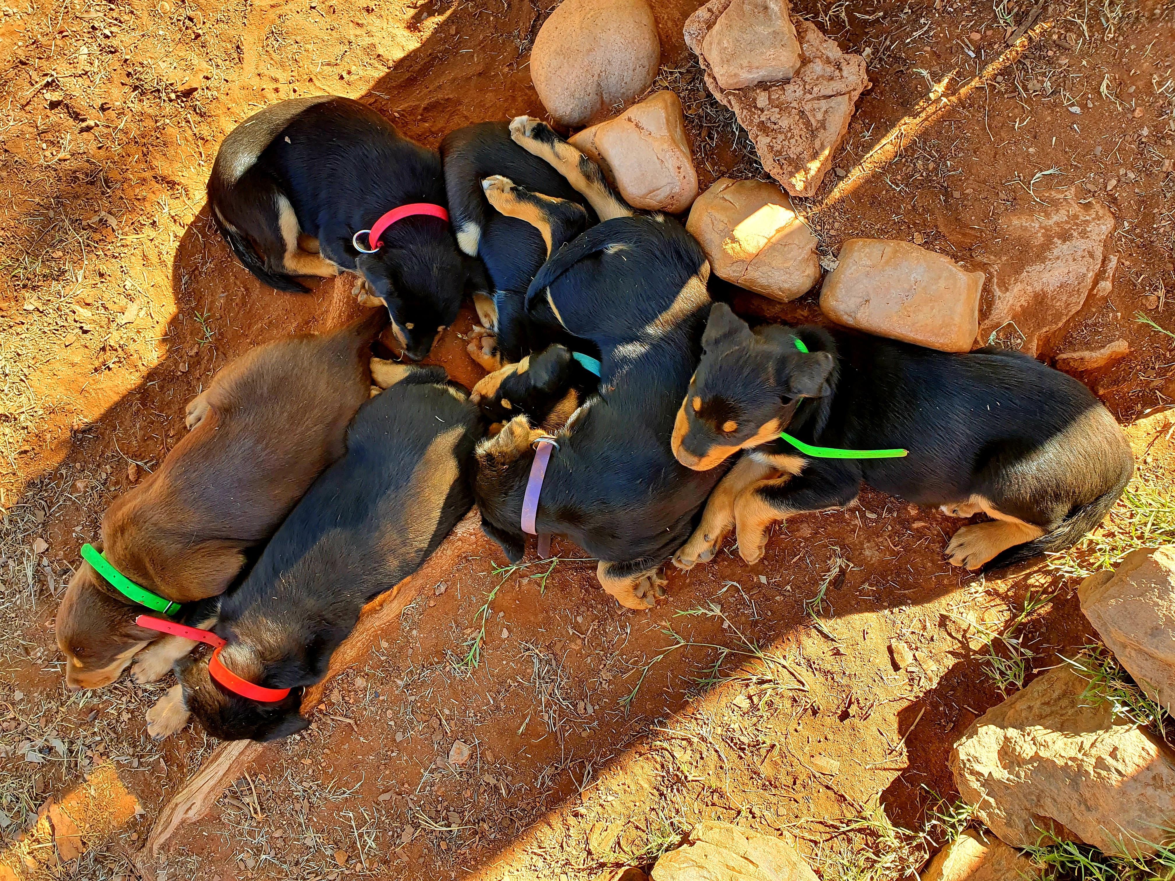 Charm x Cash Pups