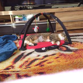 Mimi wurde heute mal ausquartiert.