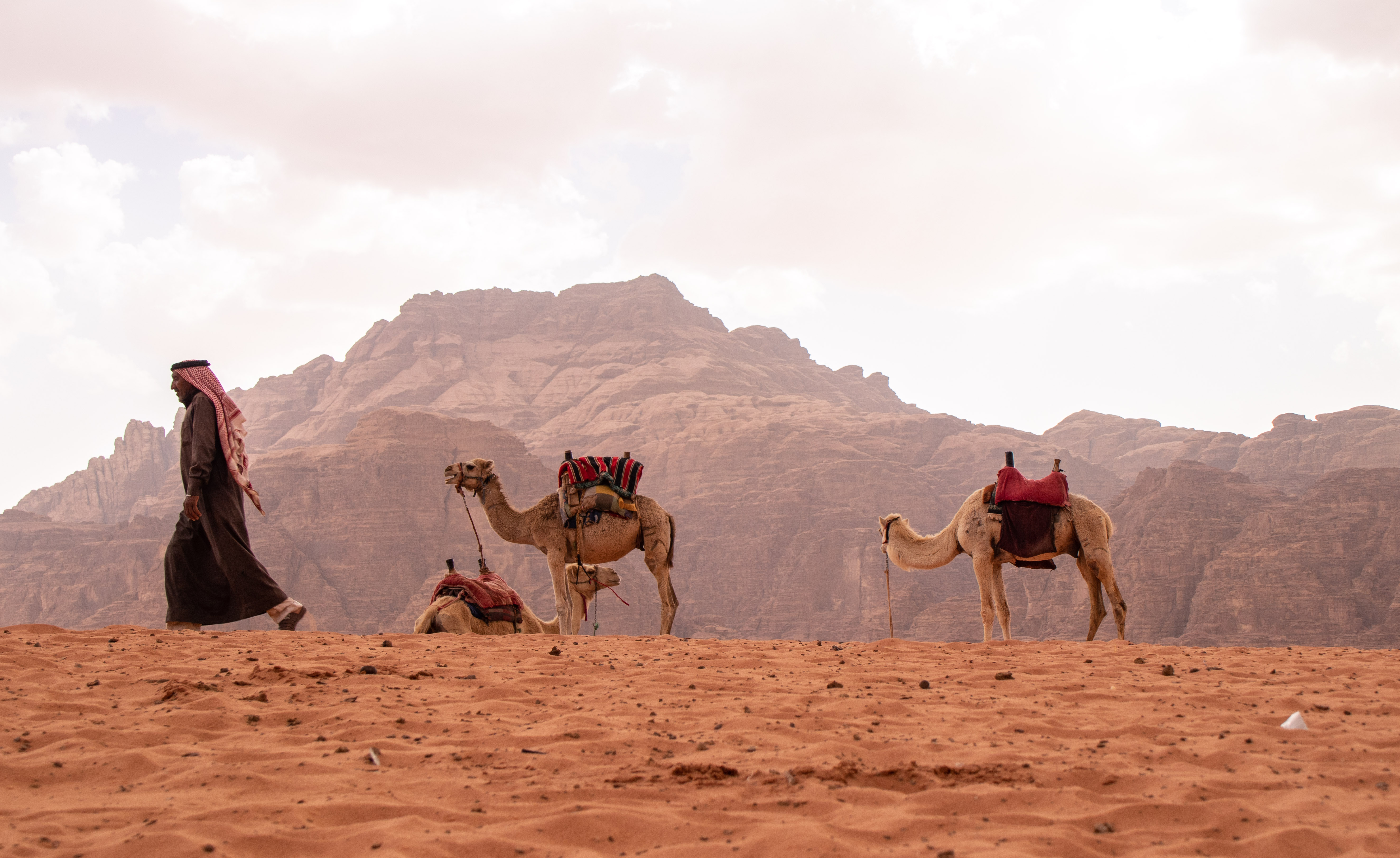 Bedouin with camels.