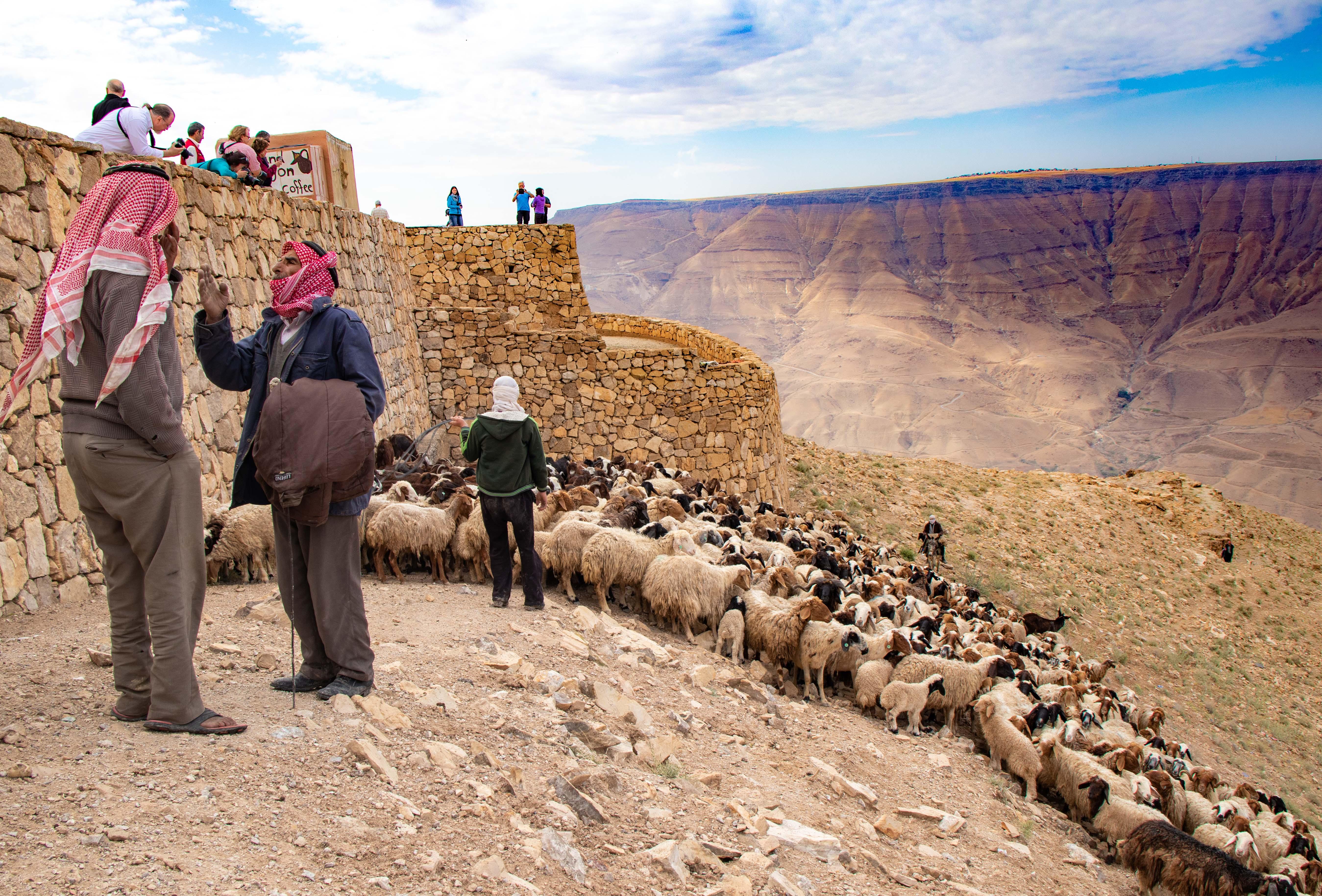 Shepherd with flock.