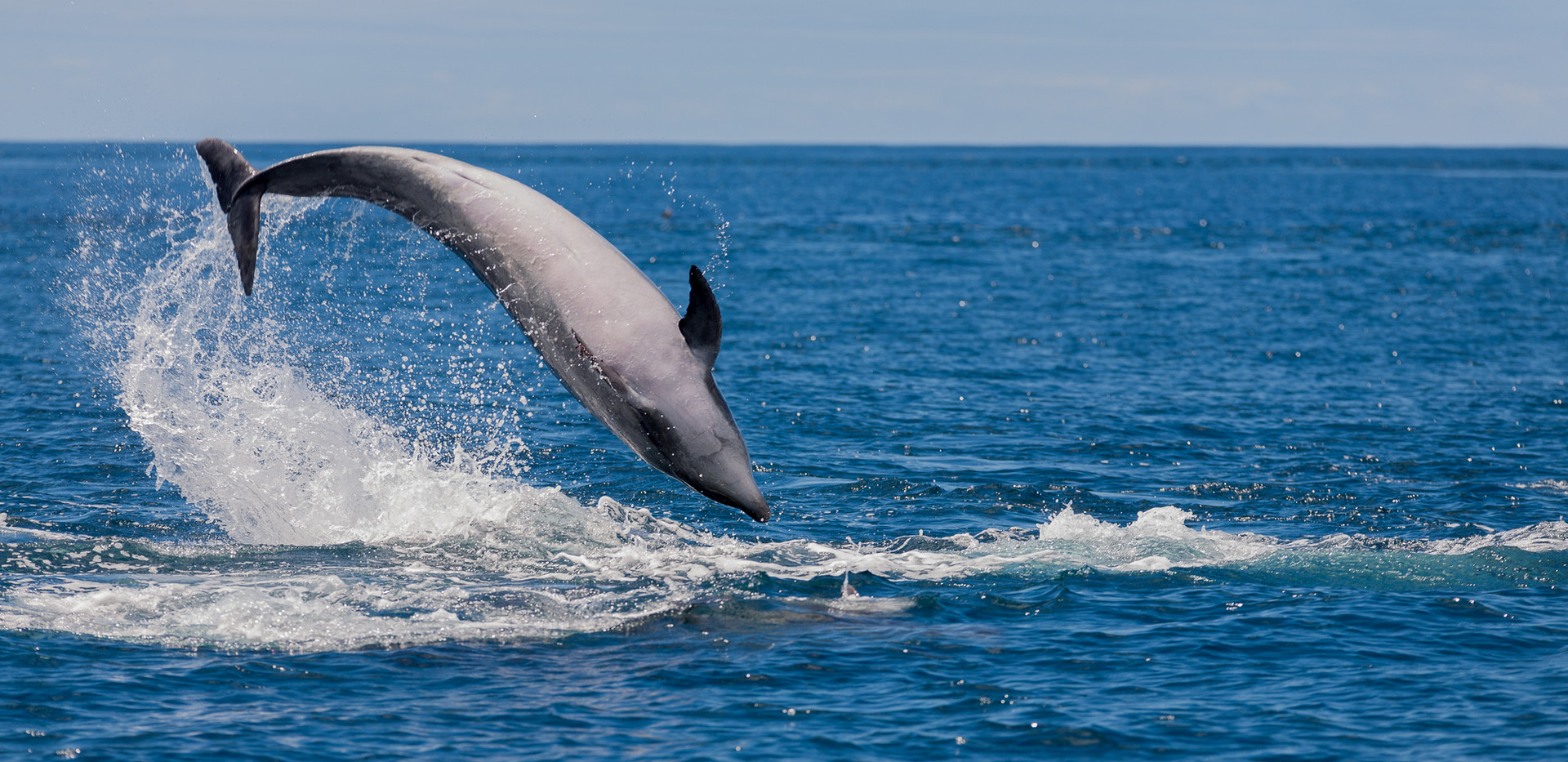 Whale watching dolphin3.jpg