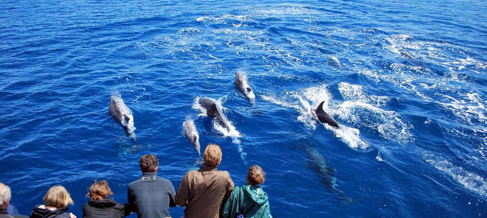 whale_watching5.JPG
