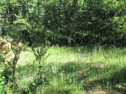 Bosques de Pucon