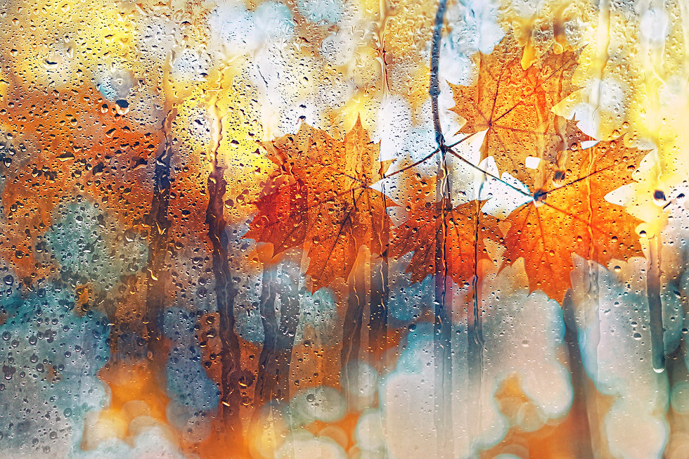 autumn leaves on rainy glass texture. co