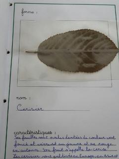 herbier Alicia (3).jpg