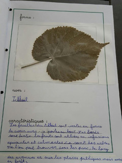 herbier Alicia (5).jpg