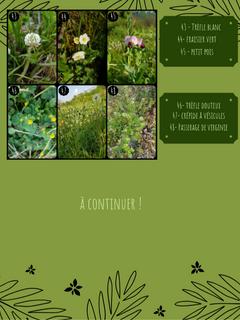 herbier 5.png