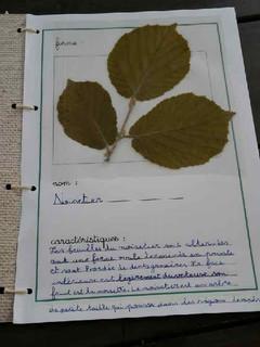 herbier Alicia (2).jpg