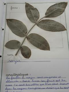 herbier Alicia (6).jpg