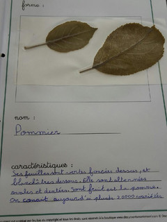 herbier Alicia (4).jpg
