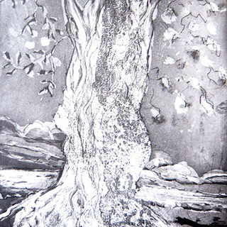Pic 3 Olive Tree
