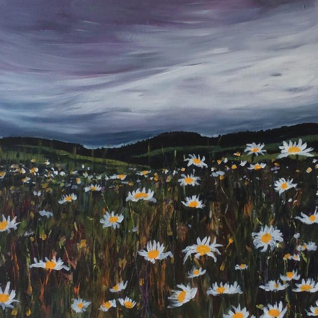 Pic 2 Normandy daisy field