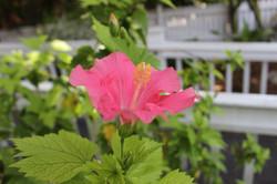 Flower gardens Angelina Key West