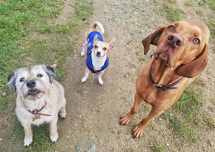 Dog walks in Wirral