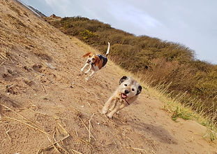 Dogs at Heswall beach