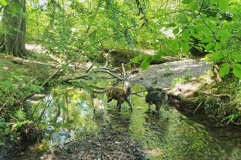 dogs out with walker in the shade at arrowe country park in wirral