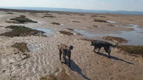 Dog walks in West Kirby