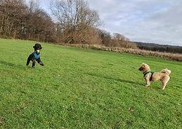 Dog walks Wirral