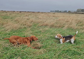 Dogs playing in Wirral