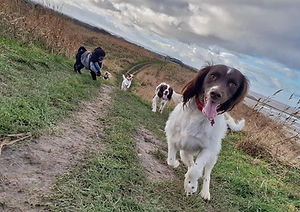 Dogs at Moreton shore