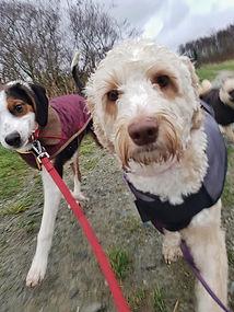 Dog friendly Wirral