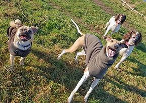 Sociable dog walks Wirral