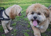 Dog walking new brighton in vale park