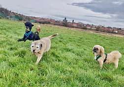 Group dog walks Leasowe
