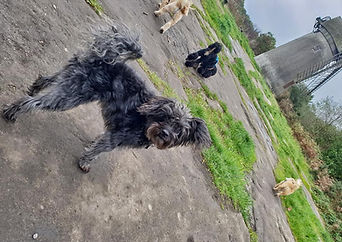 Dogs at Bidston Hill