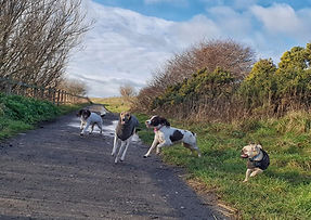 Dogs at Moreton shore along the Wirral coastal path