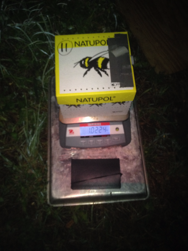 Weighing a hive at night