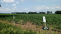 Bowl trapping bees in corn fields