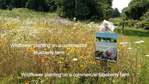 PollinatorPlanting_edited_edited.jpg