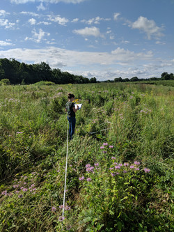 Floral transects