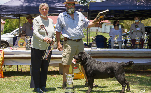 Reserve Best In Show and Dog Challenge Certificate Winner