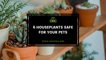 6 HOUSEPLANTS SAFE FOR YOUR PETS