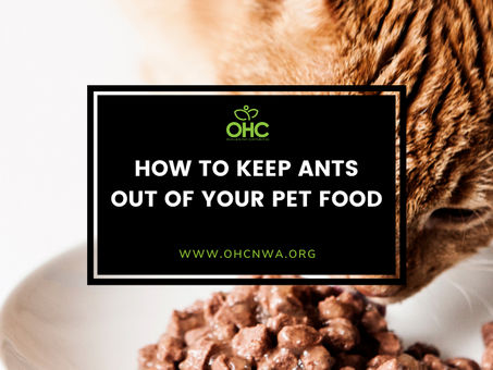 HOW TO KEEP ANTS OUT OF YOUR PET FOOD