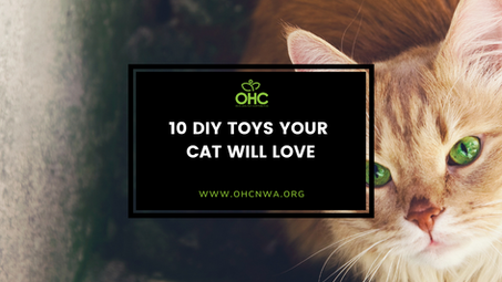 10 Toys Your Cat Will Love