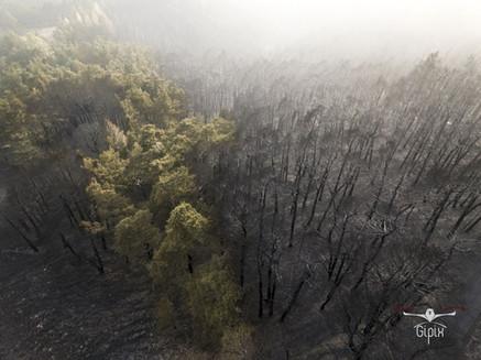 Incendio Val Susa - Paolo 014 A - con lo