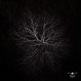 Albero come un neurone