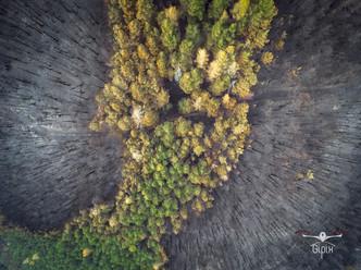 Incendio Val Susa - Luca 132 A - con log
