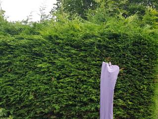 Garden maintenance Edinburgh, Loanhead