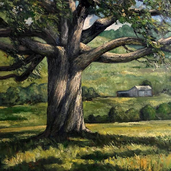 Grand Oak in Summer