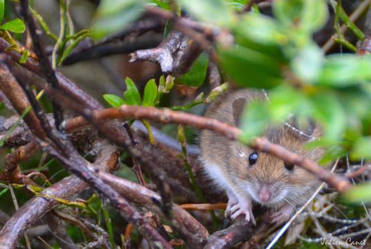 A pas de souris !