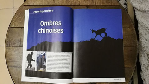 article ombre chinoises Image et Nature.