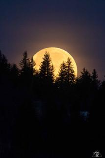 Lune résineuse