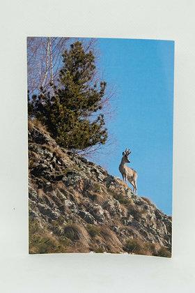 Chevreuil de montagne